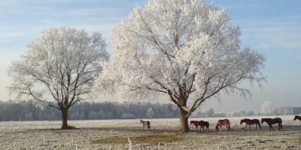 osteopathie pferde winter, pferdeherde